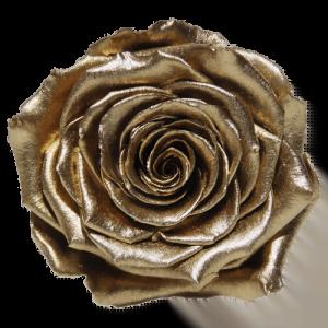 Gold Rose | Millionbox.se