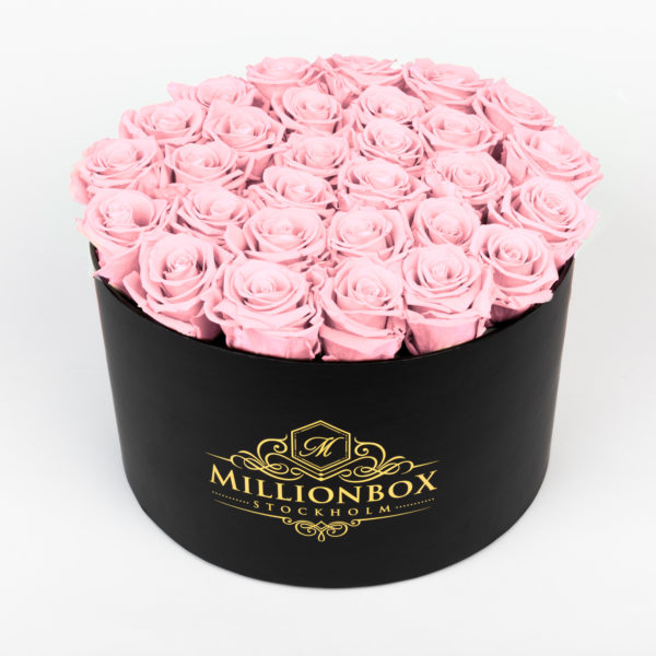 Lavinia Bello with Pink Rose | Millionbox.se