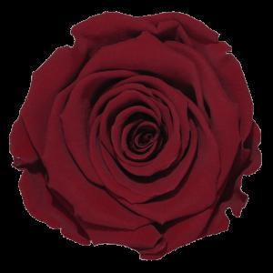 Red Rose | Millionbox.se